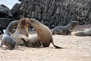 Convenio apoya la construcción de la ordenanza municipal de Gestión de Riesgos de Galápagos.
